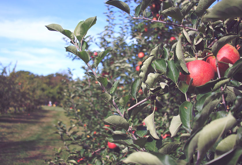 Fall Date Ideas: Apple Picking