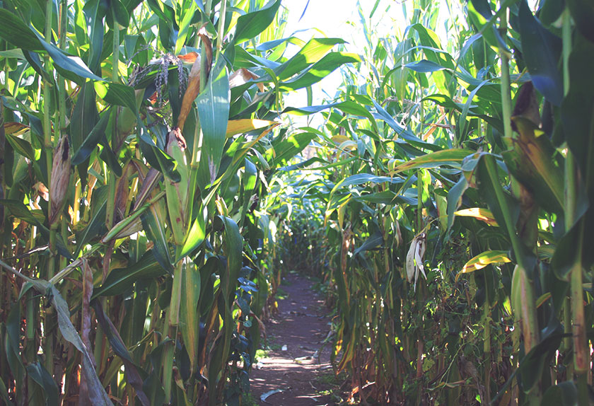 Fall Date Ideas: Corn Maze and Cider Mill